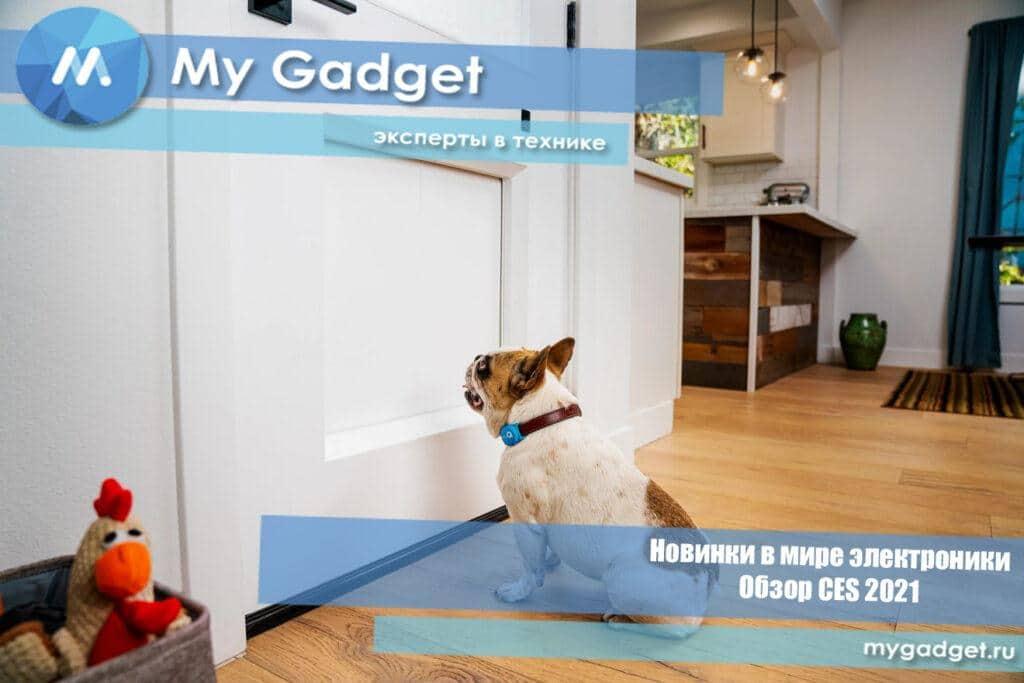 myQ Pet Portal — дверь-автомат для домашних питомцев